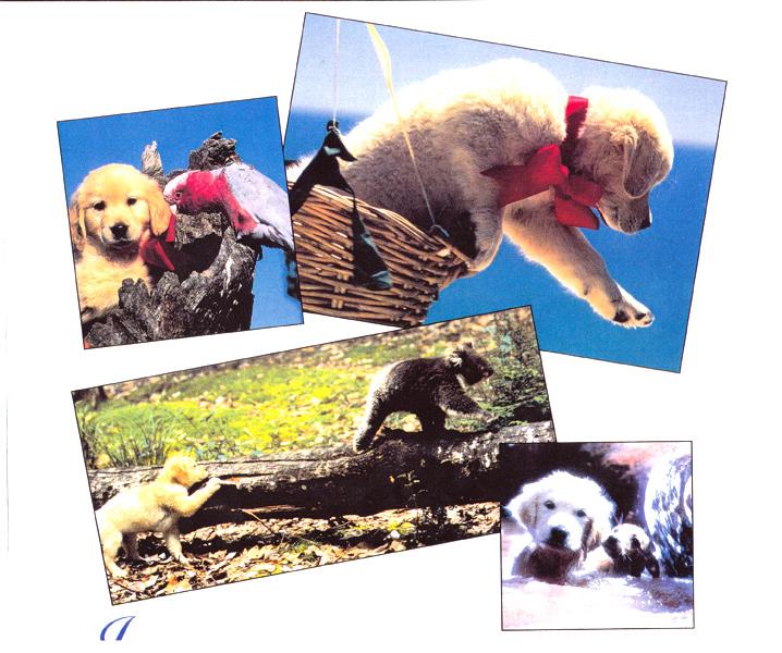クルタ夢大陸の子犬1995年