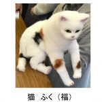 Jazz-Bunraku 涅槃(Ne-han)に行った猫 (The Cat Who Went to Heaven)